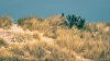 -sand-dunes.jpg