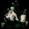 -delicate-nature.jpg