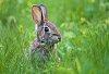 -easter-bunny2.jpg