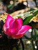 -fb_img_1586848519767.jpg