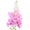 -pastel-beauty.jpg