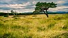 -scottish-grasslands.jpg