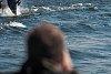 -dolphins-bombed.jpg