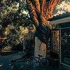 -tree-eats-bike.jpg
