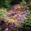 -rock-garden.jpg
