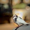 -bokeh-bird.jpg