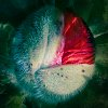 -emergence.jpg