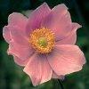 -gentle-beauty.jpg