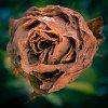 -ex-flower.jpg