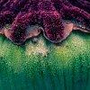 -flower-toupee.jpg