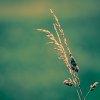 -simply-minimalist.jpg
