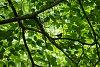 -bird-tree.jpg