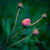 -blooms.jpg
