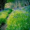 -woodland-stroll.jpg
