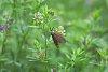 -cpr_20_native_pollinator_1.jpg