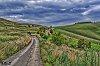 -landscape-byway-bridleway-pewseydownhills-wiltshire20201136_pe.jpg