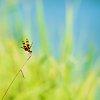 -dragonfly-reservoir.jpg