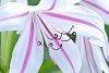 -imkp0705-800x1200-crop.jpg
