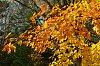 -3-automne.jpg