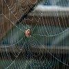 -spider-web-wet-small.jpg
