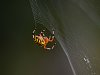-halloween-spider-small.jpg