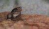 -pool-frog-k20d-zeiss-58mm-f2-biotar-t.jpg