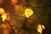 -leaf-vlog.jpg