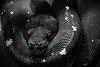 -python-2.jpg