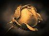 -imgp1430-edit-b-w4.jpg