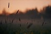 -midsummer-nocturne-12.jpg