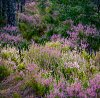 -fantasy-woodland.jpg