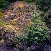 -another-fantasy-woodland.jpg