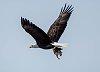 -eagle-squirrel-1.jpg