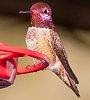 -hummingbird.jpg