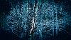 -birch-lights.jpg