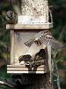 -sparrows_take_over_squirrel_feeder_not-used-yet.jpg