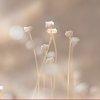 -desert-weed-4676.jpg