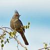 -bird-3578.jpg