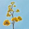-june-bees-century-plant-8561.jpg