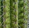 -cactus-close-up.jpg