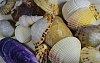 -shells2.jpg