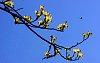 -dogwood-blossoms.jpg
