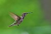 -hummingbirdsmcpentax1-4-200.jpg