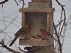 -birds_taking_over_squirrel_feeder.jpg