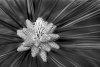 -pollen-cones-.jpg