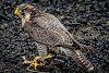 -birds-take-away.jpg