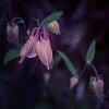 -springtime-soon-ish.jpg