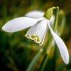 -spring-has-sprung.jpg