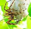 -rainbow-spider-mother-macro-martina-stoecker-.jpg