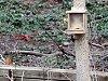 -cardinal_leaving_squirrel_feeder.jpg